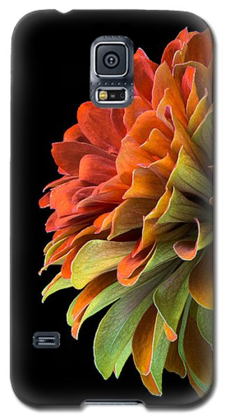 Orange And Green Zinnia  Galaxy S5 Case by Jim Hughes
