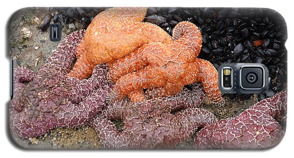 Orange And Purple Starfish Galaxy S5 Case