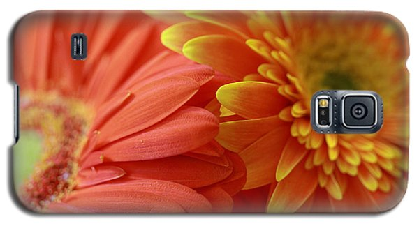 Orange And Yellow Daisies Galaxy S5 Case by Angela Murdock