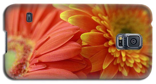 Orange And Yellow Daisies Galaxy S5 Case