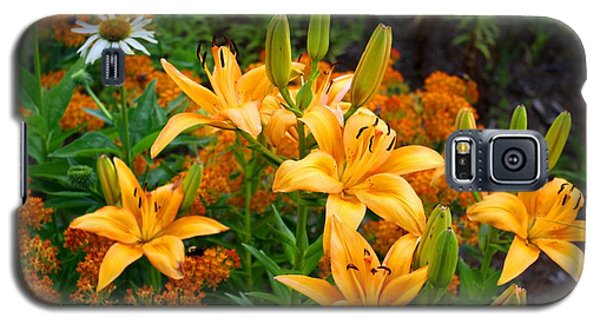 Galaxy S5 Case featuring the photograph Orange Asiatic Lilies And Butterfly Weed by Kathryn Meyer