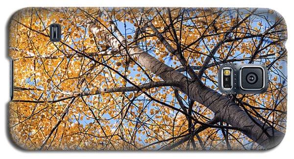 Orange Autumn Tree. Galaxy S5 Case