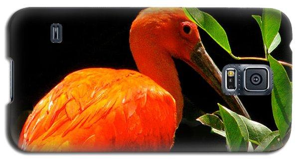 Orange Beauty Galaxy S5 Case by Debra     Vatalaro