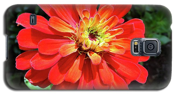 Orange Burst Zinnia Galaxy S5 Case by Sue Melvin