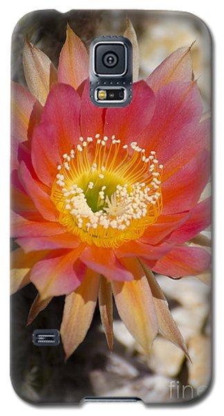 Orange Cactus Flower Galaxy S5 Case