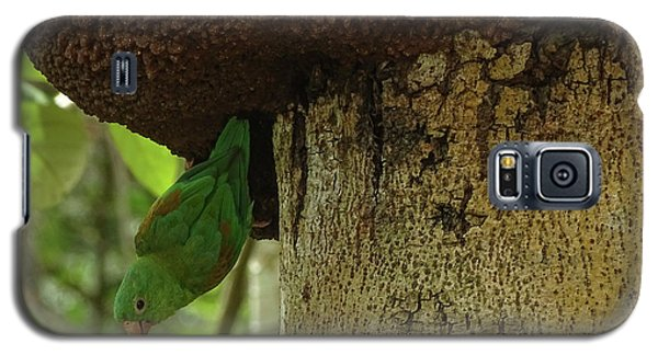 Orange -chinned Parakeet  On A Termite Mound Galaxy S5 Case