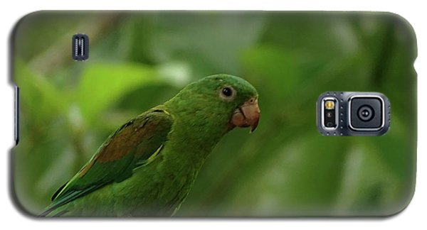 Orange-chinned Parakeet  Galaxy S5 Case