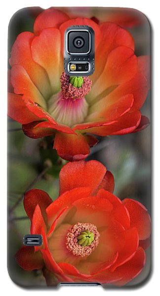 Galaxy S5 Case featuring the photograph Orange Claret Dreams  by Saija Lehtonen
