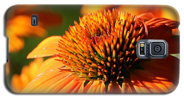 Orange Coneflower At First Light Galaxy S5 Case