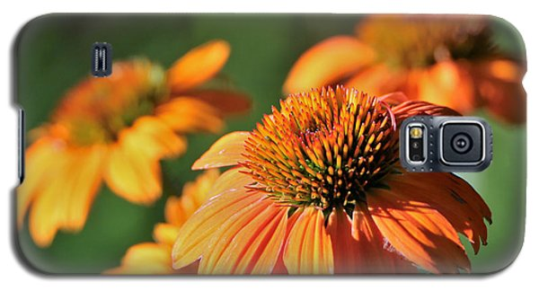 Orange Cone Flowers In Morning Light Galaxy S5 Case