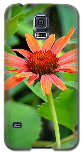 Orange Coneflower Galaxy S5 Case by Sue Melvin