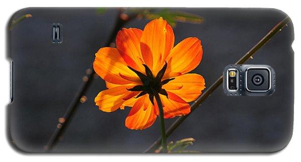 Orange Cosmo Galaxy S5 Case