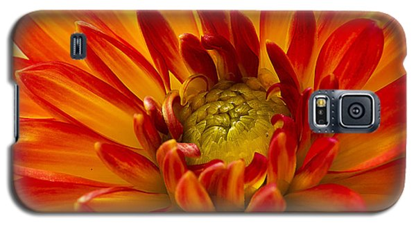 Orange Dahlia Galaxy S5 Case