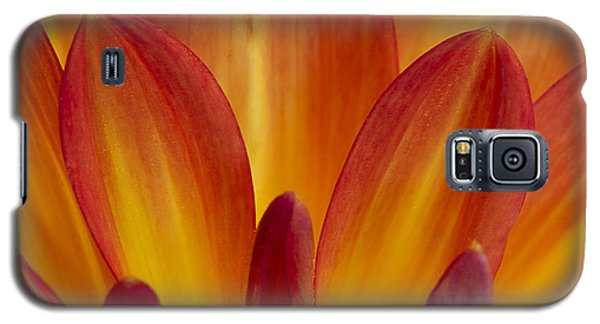 Orange Dahlia Petals Galaxy S5 Case