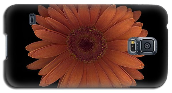 Orange Daisy Front Galaxy S5 Case by Heather Kirk