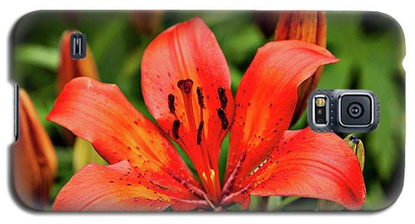 Galaxy S5 Case featuring the photograph Orange Day Lilly Single by Mary Jo Allen