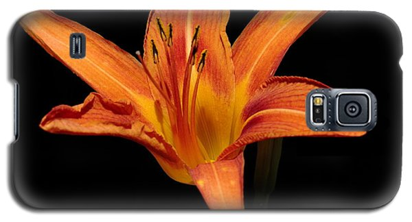 Orange Day-lily Galaxy S5 Case