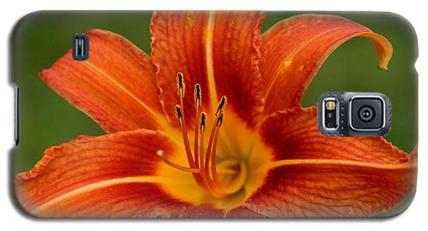 Orange Day Lily No.2 Galaxy S5 Case
