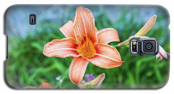 Orange Daylily Galaxy S5 Case