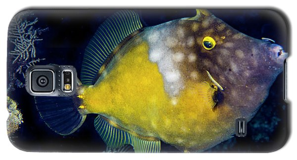 Galaxy S5 Case featuring the photograph Orange Filefish by Jean Noren