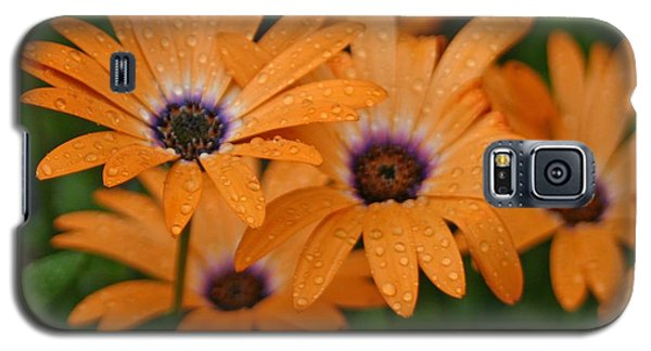 Orange Gazania Galaxy S5 Case