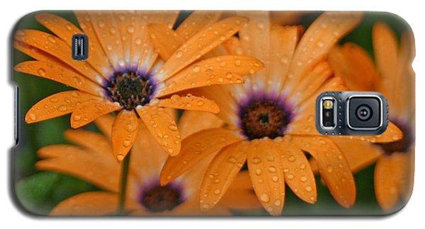 Orange Gazania Galaxy S5 Case