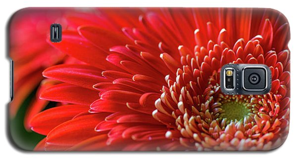 Galaxy S5 Case featuring the photograph Orange Gerbera by Clare Bambers