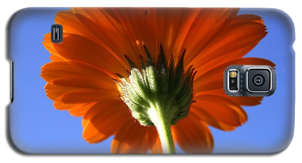 Orange Gerbera Flower Galaxy S5 Case by Ralph A  Ledergerber-Photography