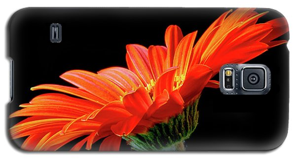Orange Gerbera On Black Galaxy S5 Case