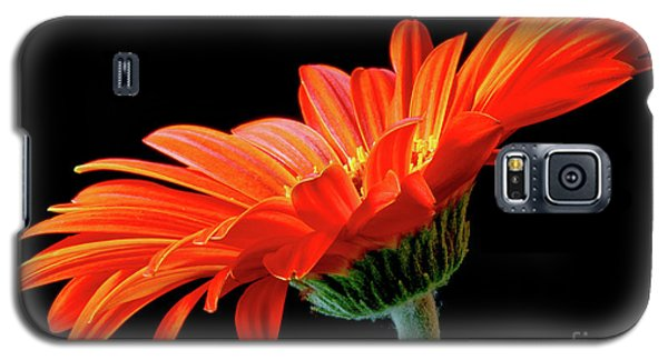 Orange Gerbera On Black Galaxy S5 Case