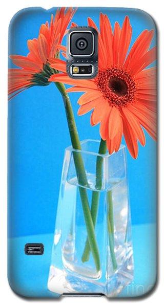 Orange Gerberas In A Vase - Aqua Background Galaxy S5 Case