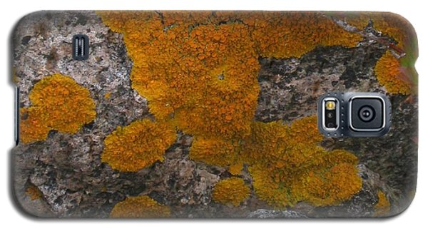 Galaxy S5 Case featuring the photograph Orange Lichen On Granite by Mary Bedy