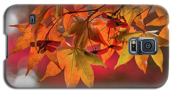 Galaxy S5 Case featuring the photograph Orange Maple Leaves by Clare Bambers