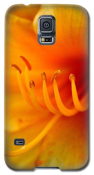 Galaxy S5 Case featuring the photograph Orange Marmalade 2 by David Dunham