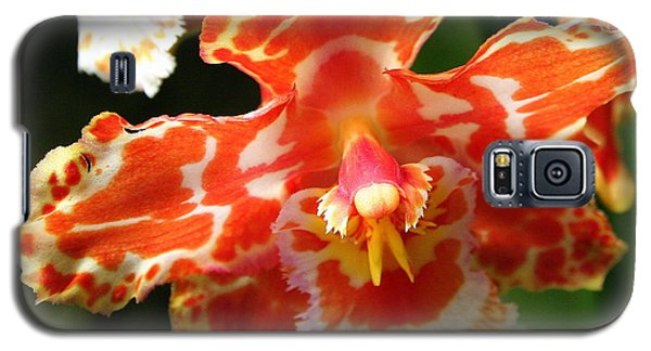 Orange Orchid Galaxy S5 Case by Laurel Talabere