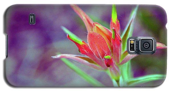 Orange Paintbrush Flower Galaxy S5 Case