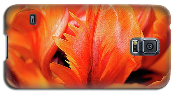 Galaxy S5 Case featuring the photograph Orange Princess Tulip Natures Abstract by Julie Palencia