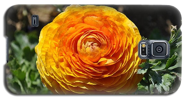 Orange Ranunculus Galaxy S5 Case