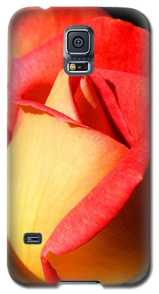 Orange Rosebud Galaxy S5 Case by Ralph A  Ledergerber-Photography