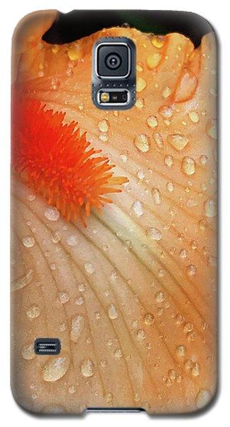 Orange Sherbet Galaxy S5 Case