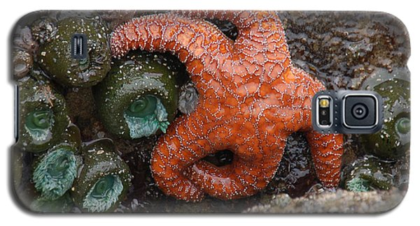 Orange Starfish And Anemonies Galaxy S5 Case