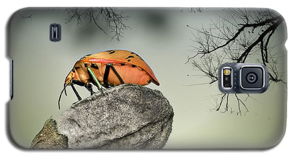 Orange Stink Bug 001 Galaxy S5 Case