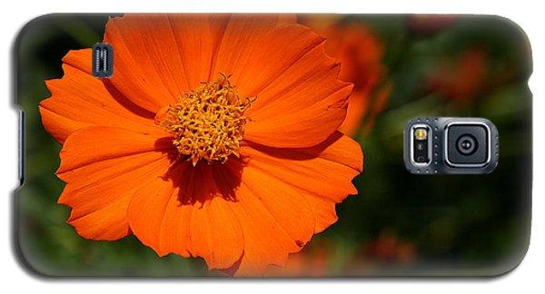 Orange Sulfur Cosmos Flower Galaxy S5 Case