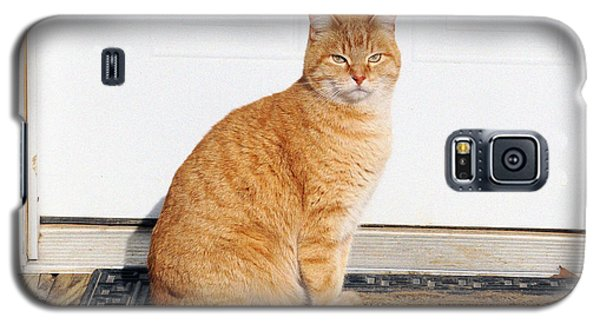 Orange Tabby Cat Galaxy S5 Case