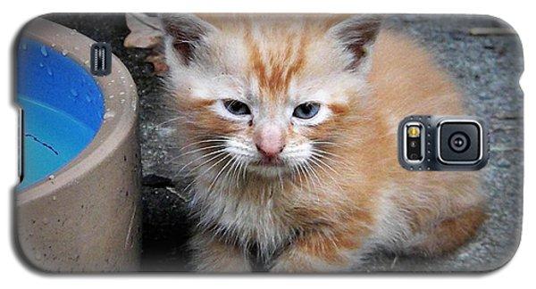Orange Tabby Shorthair Kitten Galaxy S5 Case