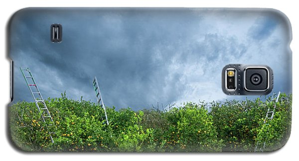 Galaxy S5 Case featuring the photograph Orange Tree by Carolyn Dalessandro