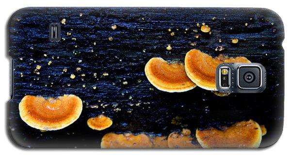 Orange Tree Fungus Galaxy S5 Case