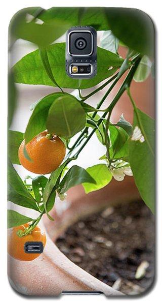 Orange Tree Galaxy S5 Case