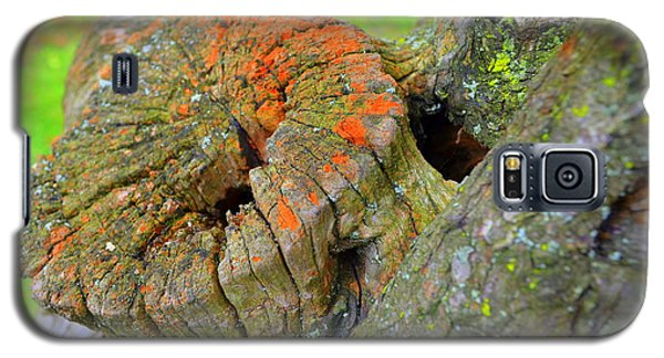Orange Tree Stump Galaxy S5 Case