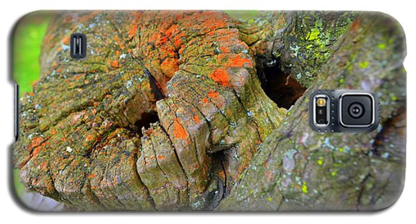 Orange Tree Stump Galaxy S5 Case